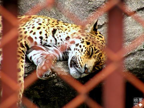 動物園にて